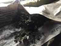 Саракташские полицейские у местного жителя изъяли марихуану