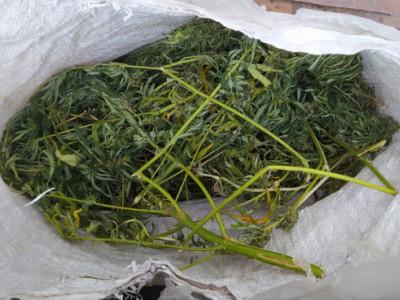 В районах Оренбургской области борятся с наркоманией